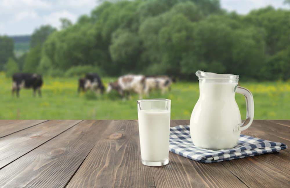 Leite vaca fresco